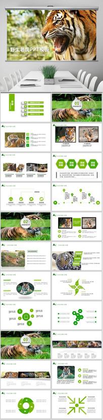 野生保护动物老虎ppt模板