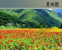 田园乡村花卉景观