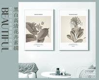 黑白高清花卉素描