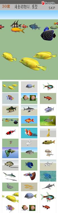 鱼模型素材