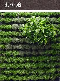 垂直绿化植物装饰