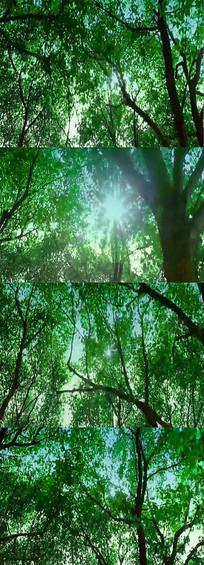 森林背景视频实拍素材