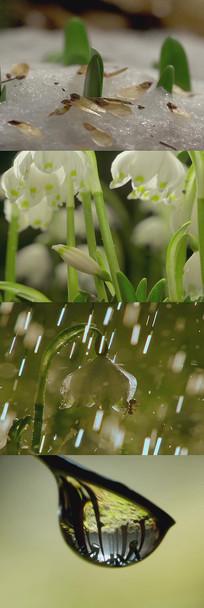 开花下雨春天萌芽背景视频
