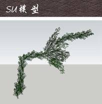爬藤植物SU