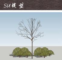 日式庭院乔木灌木植物SU