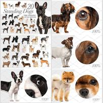 超多宠物狗狗图片