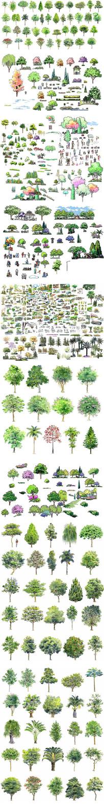 园林绿化树木立面彩图