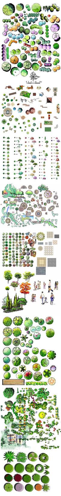 植物手绘平面图