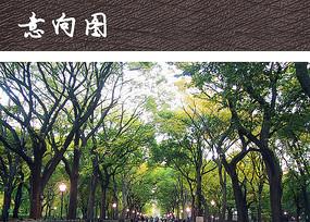 公园行道树景观