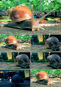 蜗牛特写视频蜗牛前进蜗牛爬 mp4