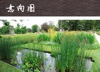 池塘植物景观 JPG