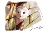 猫头鹰的暗中观察插画