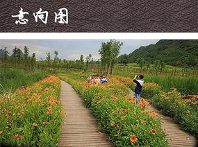 栈道花卉植物景观
