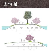 公园道路景观断面分析图