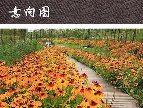 湿地公园木栈道景观