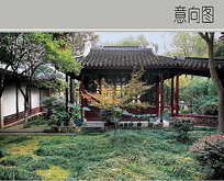 古典庭院槭树配置