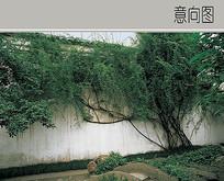 景墙植物配置