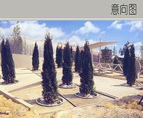 松科植物造景