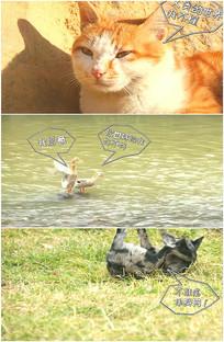 单身狗小动物爱情搞笑视频