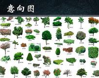 绿色园林植物PSD素材