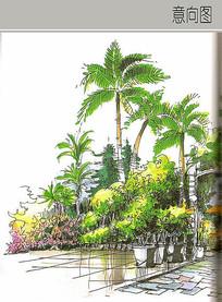 盆栽植物手绘图