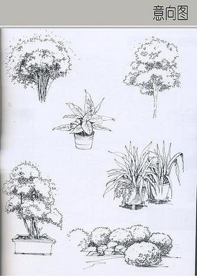 乔木立面图手绘线稿