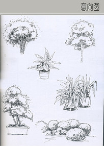 植物盆栽画法