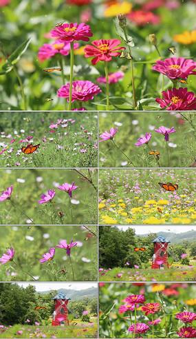 蝴蝶实拍视频