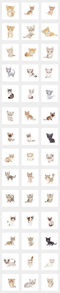 可爱猫咪集合