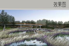 生态湿地芦苇景观效果图