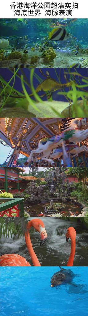 香港海洋公园超清实拍视频