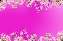 粉色小花PSD背景素材