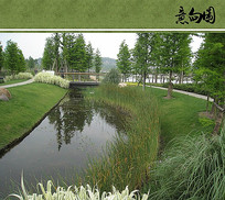 水生植物意向图 JPG