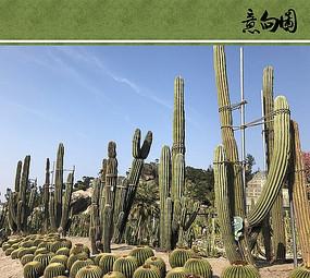 热带植物园意向图