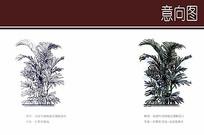 棕竹凤尾竹植物组合搭配手绘