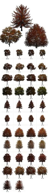 PNG秋天树木素材