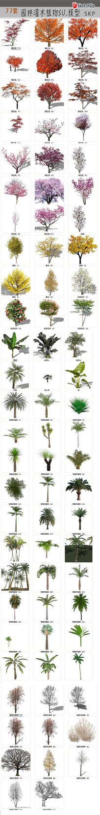 丛林树木模型