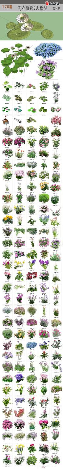 花卉绿化植物模型