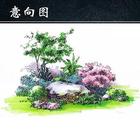 景石植物手绘效果图