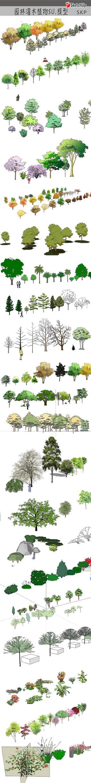 园林绿化植物模型 skp