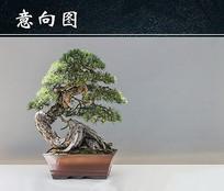 盆景松树图
