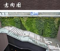 墙面立体绿化