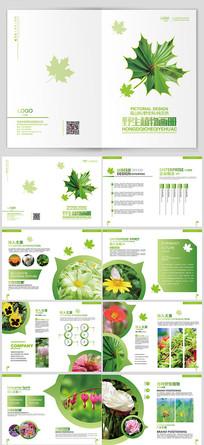 清新野生植物画册
