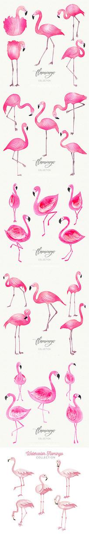 不同姿势的水彩火烈鸟图案
