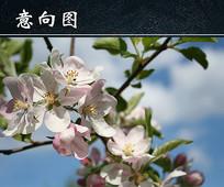 春天桃花绽放图