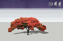 澳洲火焰木su模型