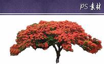 澳洲火焰木植物立面素材