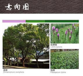 工业区乔木灌木植物