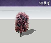 红叶石楠柱SU模型 skp