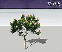 黄山栾树SU模型 skp